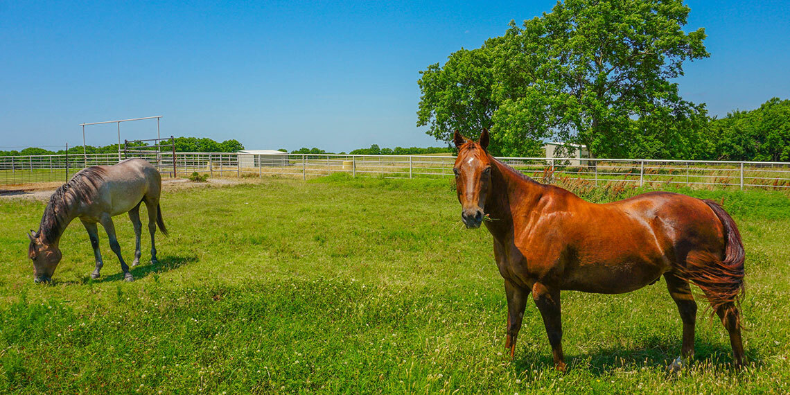 Horses at Beyond Whit's End Farm and Retreat in Sulphur, Oklahoma